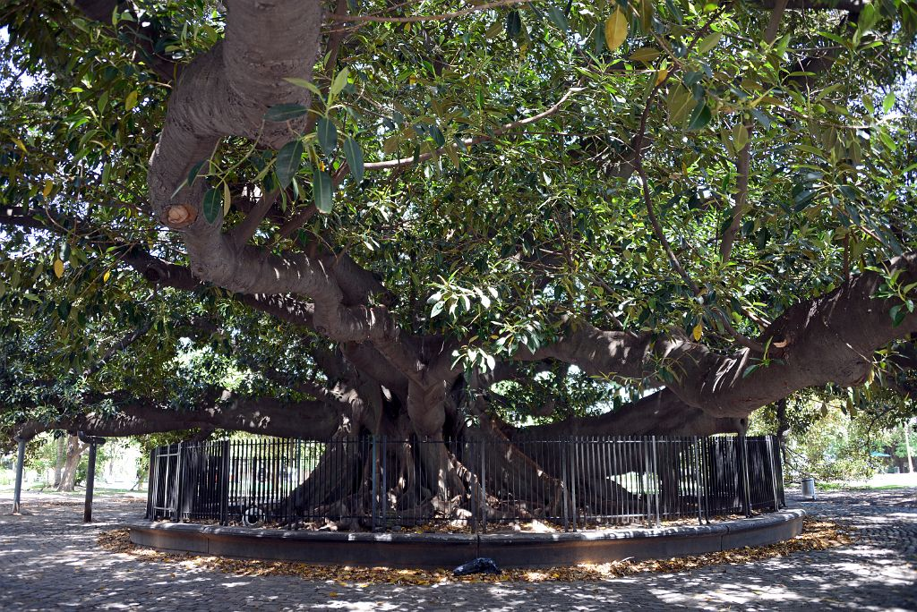 14 Large Tree Plaza Ramon J Carcano In Recoleta Buenos Aires